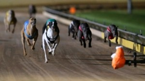 greyhound racing two