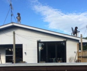 Dogs on Roof cropped