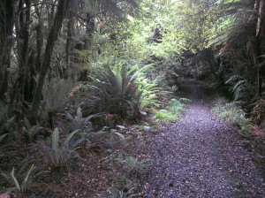 Fern gully alongside the old Kaipipi tramway