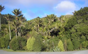 The Nikau Reserve, soon to  be renamed in honour of Barry Hadfield