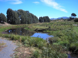 The Te Roto Wetland: an industrial dump becomes an attractive environment