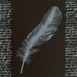 """Feather"" by Pam Kessler"