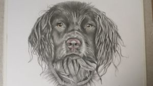 The dog is called Izzy and is graphite on water colour paper.